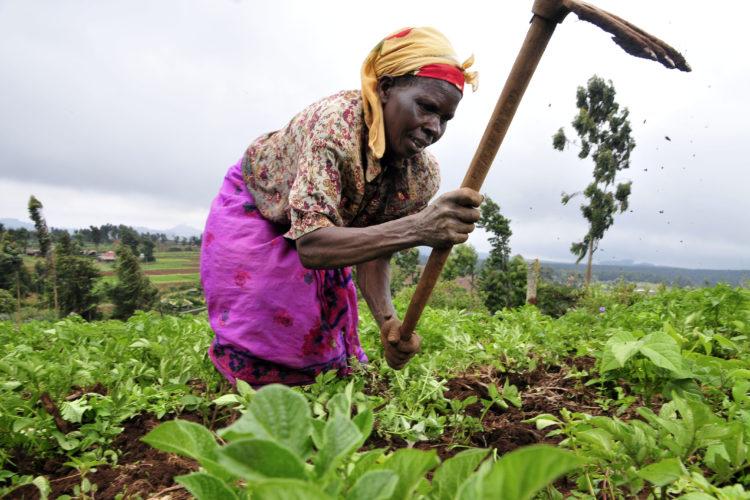L'agriculture en Afrique